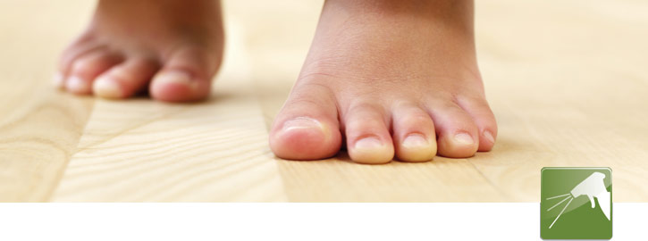 Onderhoud van laminaatvloer, parketvloeren en pvc vloeren